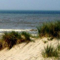 Les dunes des Landes